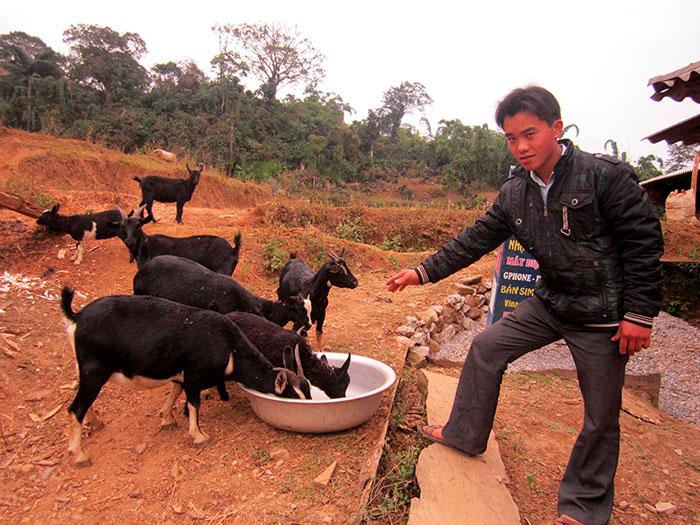 Người dân thôn Trung Vàng Khổ, xã Trung Thu chăm sóc đàn dê. Ảnh TL