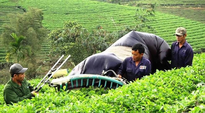 Kinh tế vườn đồi ngày càng phát triển