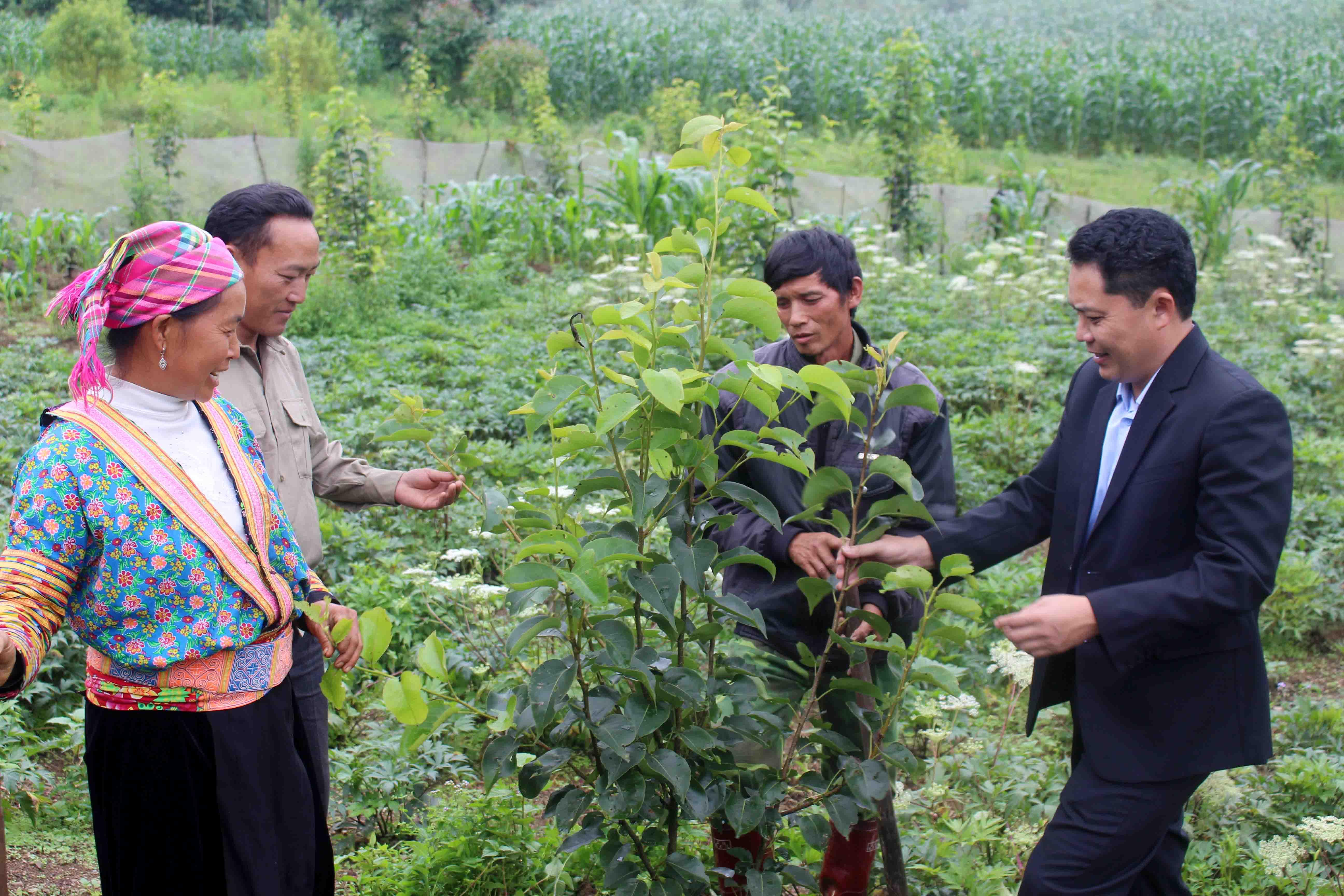 Nhiều giống cây mới tiếp tục được đưa vào trồng, chăm sóc góp phần nâng cao thu nhập trên cùng diện tích canh tác