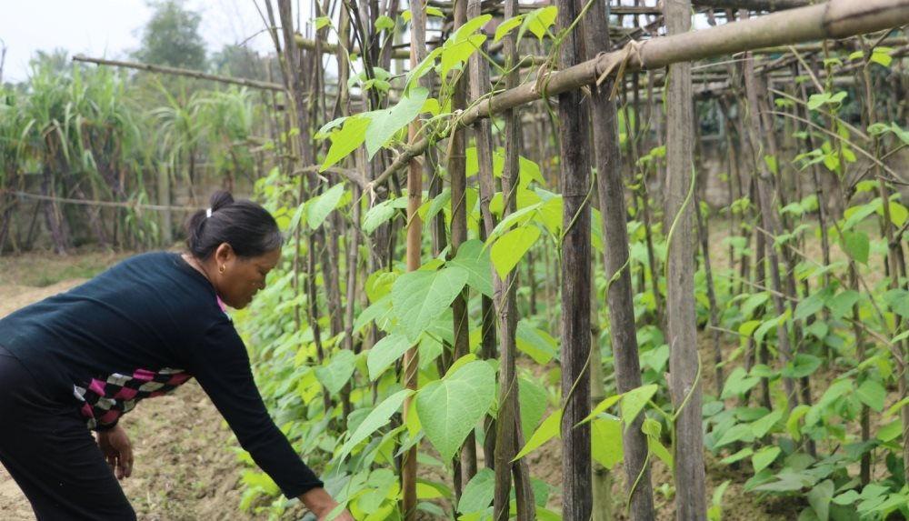 Màu xanh đã trở lại ở vùng rốn lũ xã Tượng Sơn, huyện Thạch Hà, Hà Tĩnh