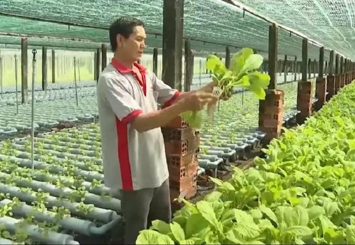 Ông Phan Tấn Nghiêm bên vườn rau được trồng với công nghệ thủy canh.