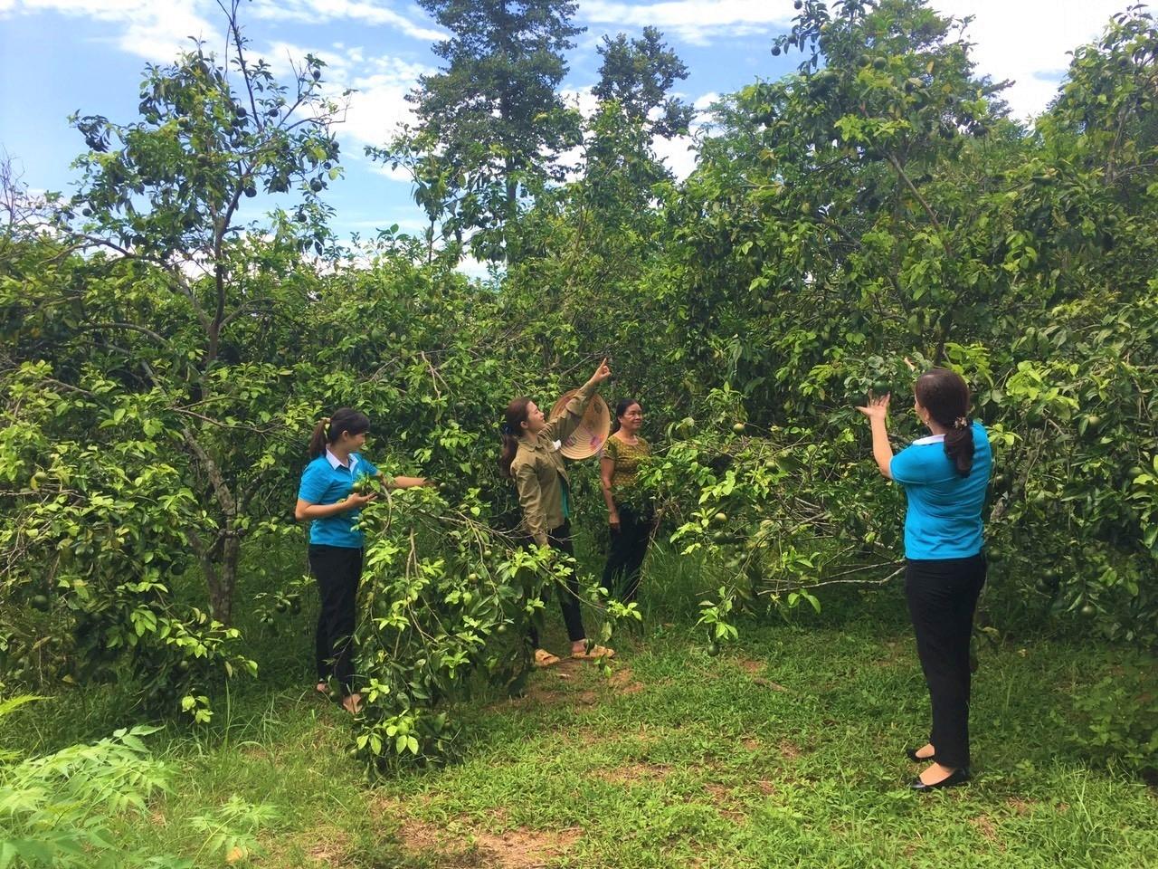 Hiệu quả từ mô hình trồng cam của gia đình chị Trương Thị Diệu Linh (đứng thứ 2 bên trái sang) ở xóm Tân Mùng, xã Tam Hợp, huyện Quỳ Hợp, Nghệ An.