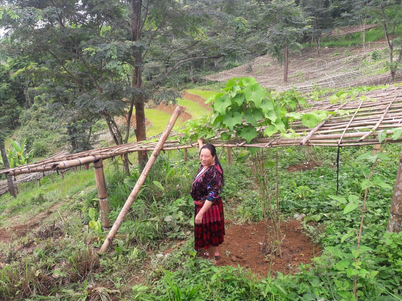 Người dân chuyển đổi đất một vụ sang trồng các loại cây ăn quả, rau màu