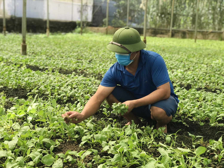 : Trang trại rau hữu cơ của Công ty cổ phần rau An toàn Hải Anh.
