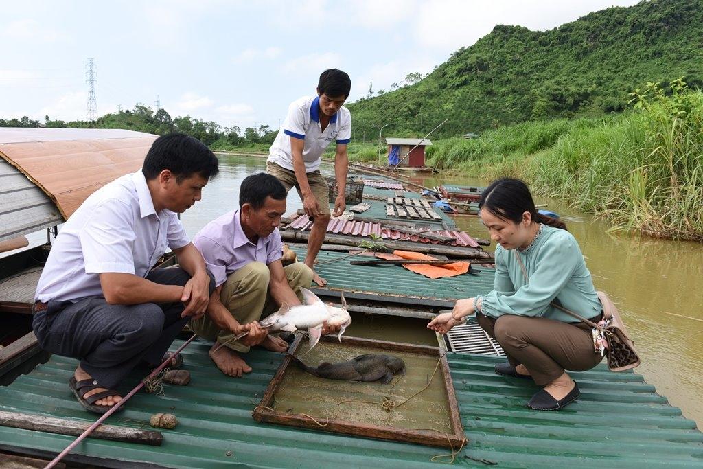 Từ nuôi cá, trung bình mỗi thành viên ở HTX Sản xuất - Kinh doanh cá đặc sản Thái Hòa, (Thái Hòa, Hàm Yên) lãi từ 100-350 triệu đồng/năm.