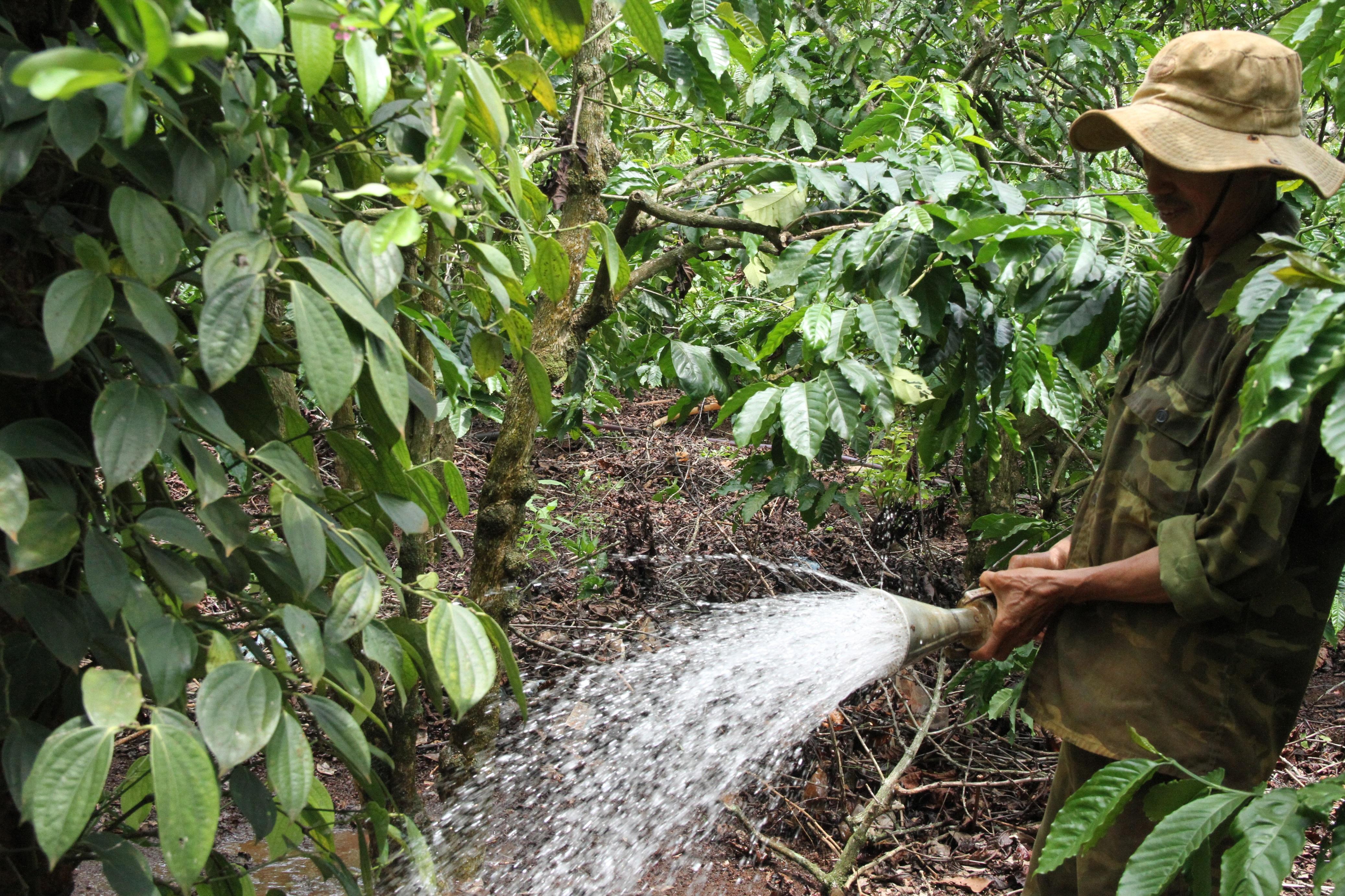 Nông dân Tây Nguyên tưới cà phê kịp thời vụ