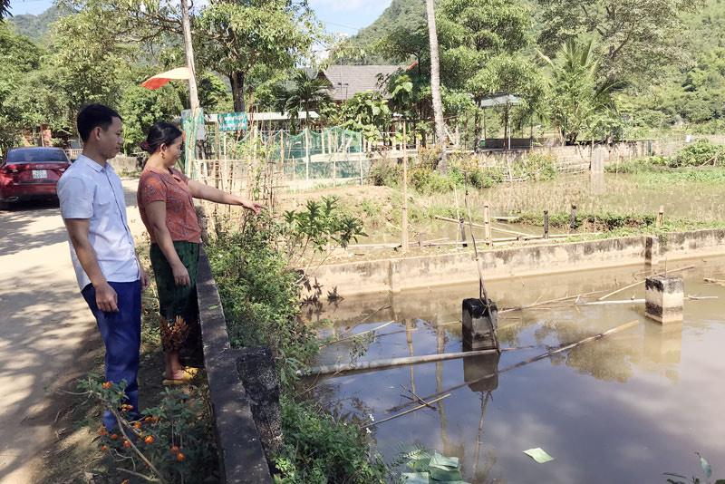 Ao nuôi cá dầm xanh của người dân xã Nhân Mỹ, huyện Tân Lạc, Hoà Bình