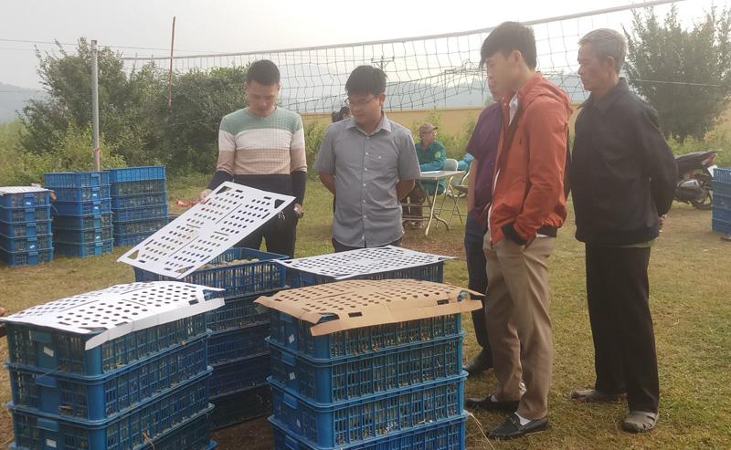 Người dân xã Hữu Lợi (huyện Yên Thủy) được hỗ trợ gà giống phát triển sản xuất (Ảnh Internet).