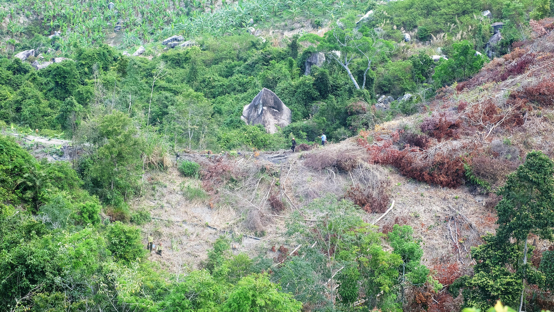 Nhiều diện tích rừng ở Tiểu khu 231, xã Suối Tân bị tàn phá