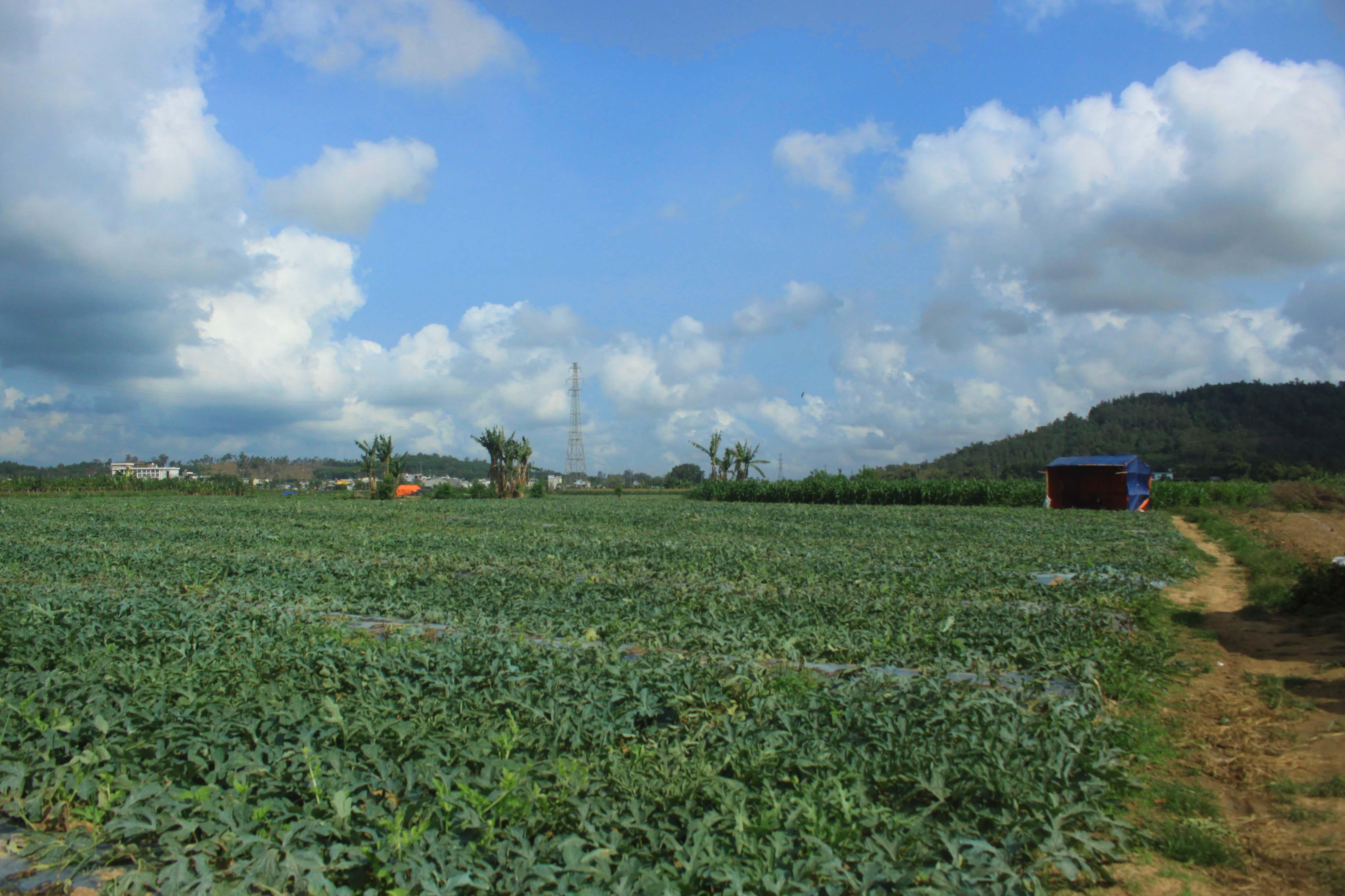 Công ty CP Chế biến tinh bột sắn xuất khẩu Bình Định đã cho người dân thuê hàng chục hét ta đất không đúng quy định trong thời gian dài