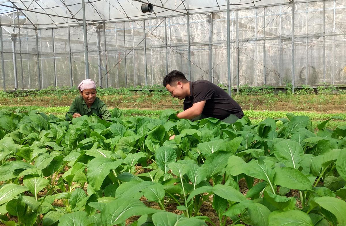 Phó Bí thư Đoàn xã Tân Vinh, Đinh Thế Ngữ Tôn hướng dẫn nông dân áp dụng đúng quy trình sản xuất rau an toàn, giúp nâng cao hiệu quả sản xuất nông nghiệp.