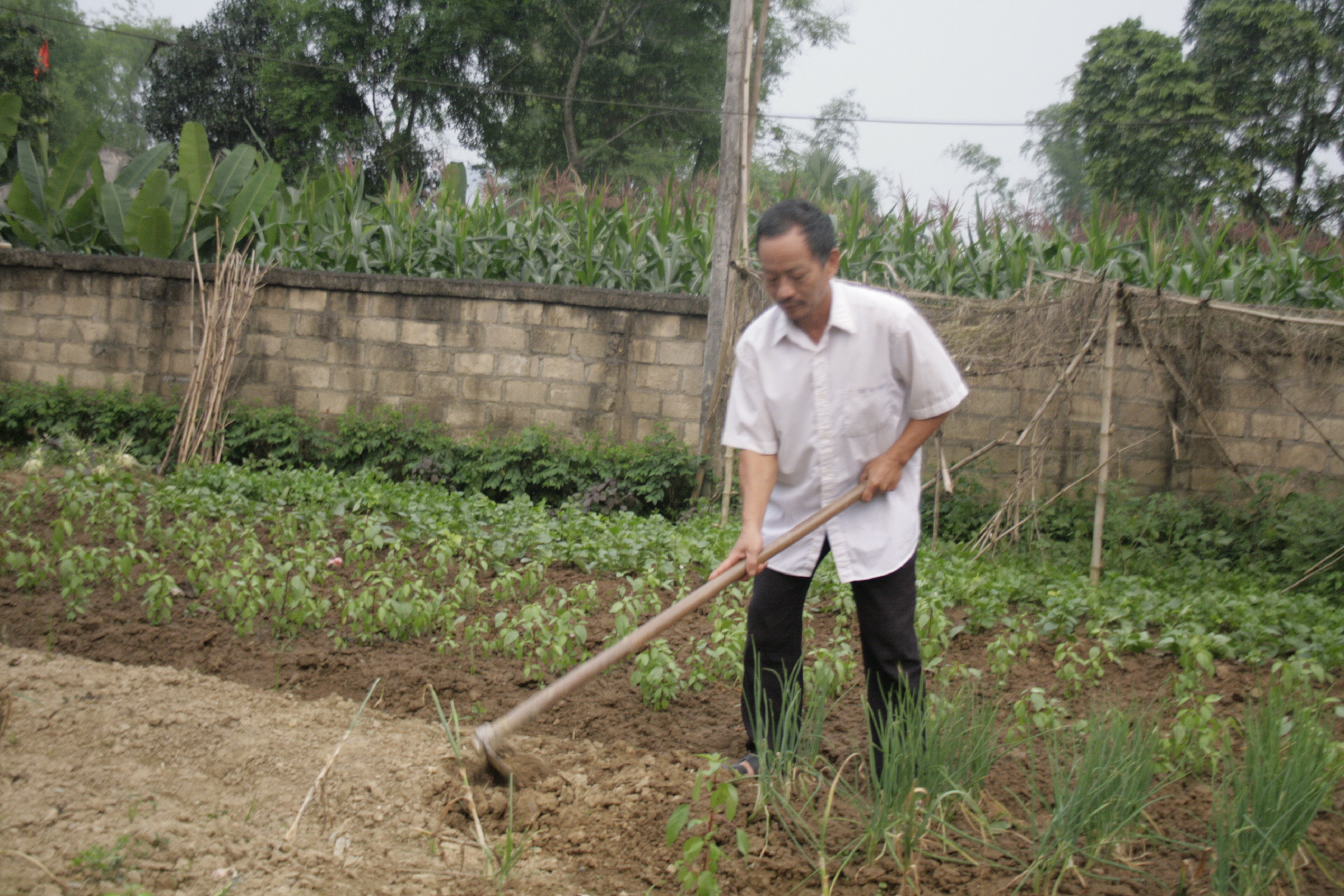 Ông Đào Minh Tiến với công việc hàng ngày
