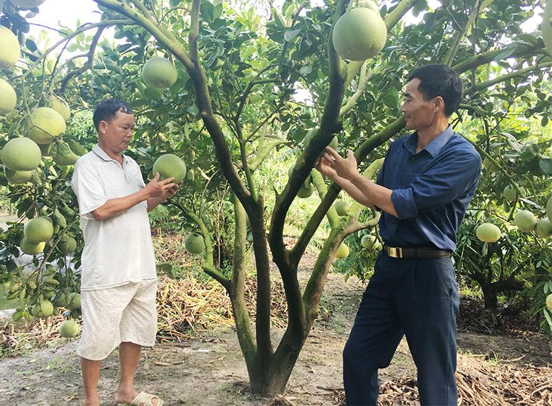 Mô hình cây ăn quả theo tiêu chuẩn VietGAP của nông dân tỉnh Hoà Bình.