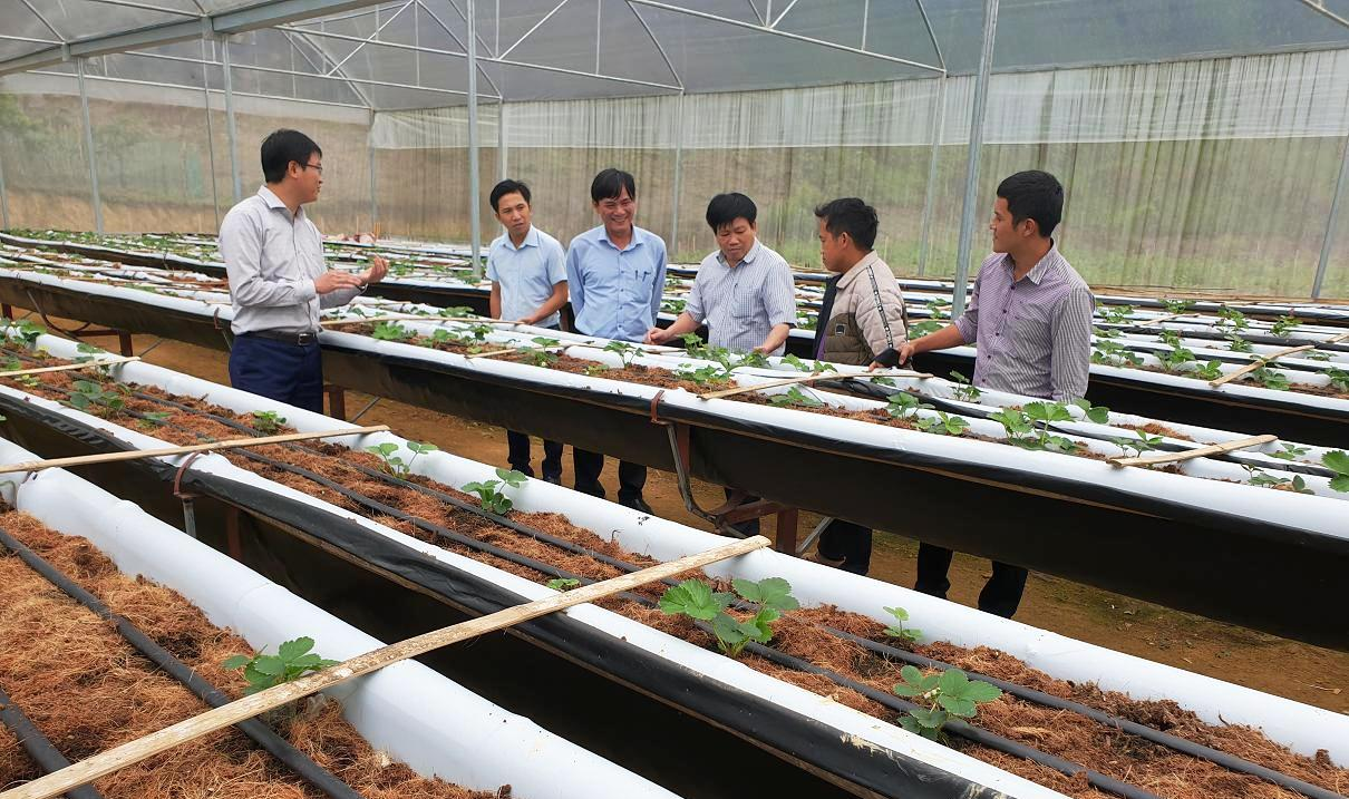 Mô hình trồng dây tây trong nhà lưới ở Mường Lống cho thu nhập hơn 300 triệu đồng/ha.