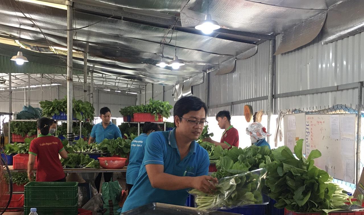 Rau sạch được đóng gói sau thu hoạch