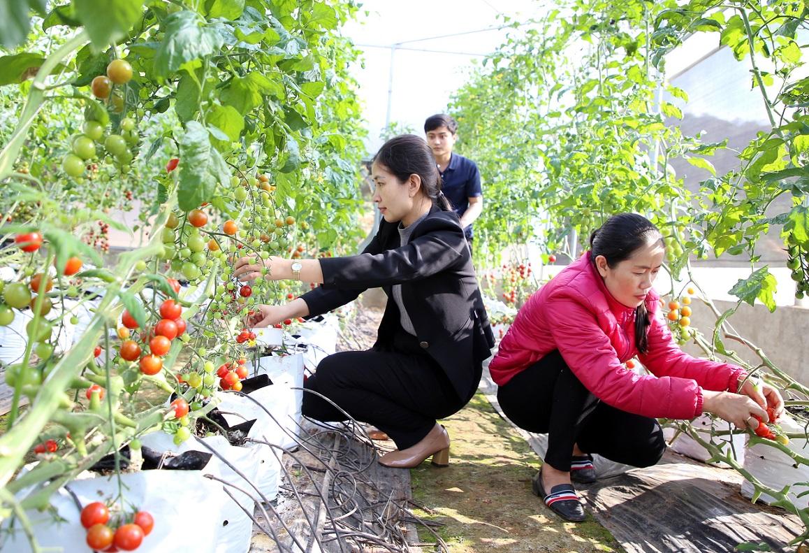 Tham quan mô hình nông nghiệp sạch trên đỉnh đèo Sa Mù