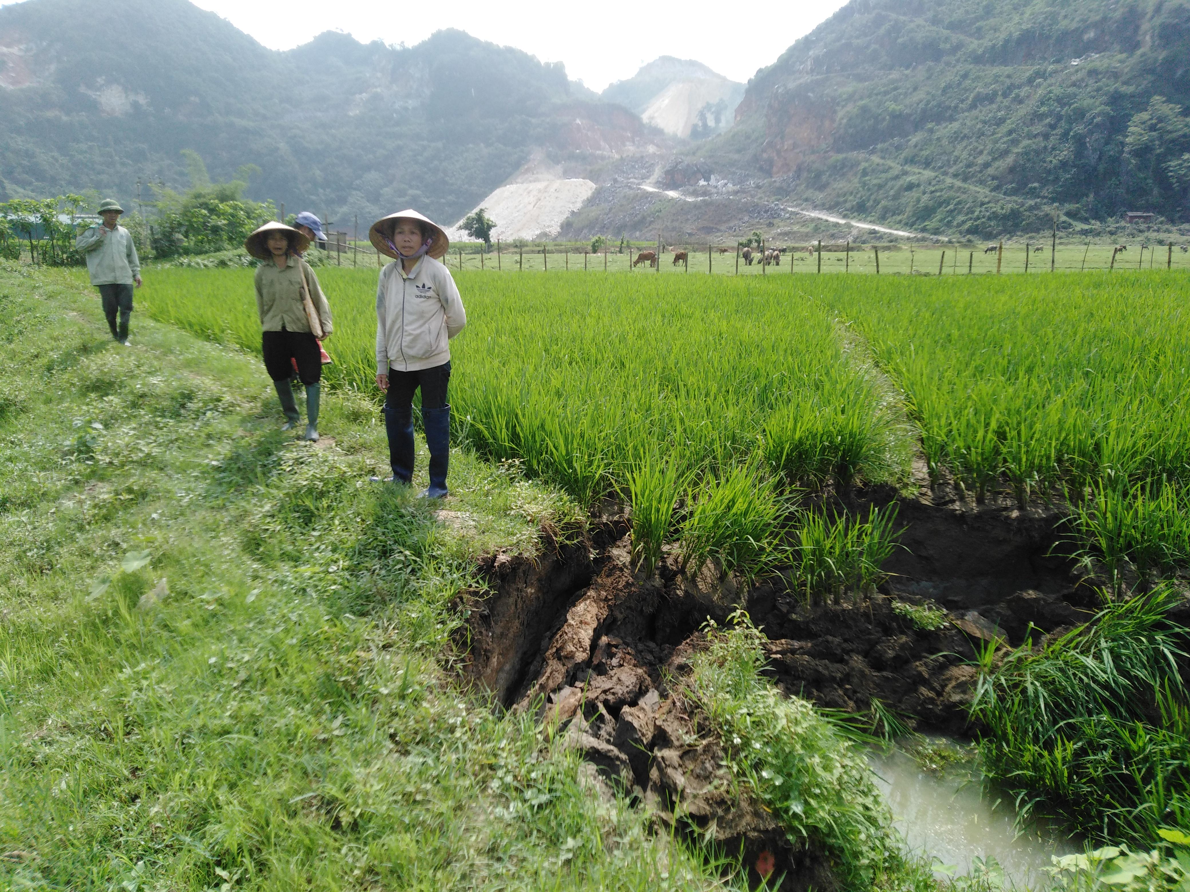 Một trong 6 hố sụt đất trên cánh đồng Na Pải, xã Châu Hồng – huyện Quỳ Hợp – Nghệ An.