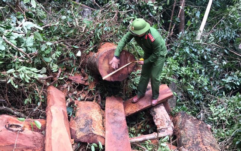 Một vụ phá rừng bị phát hiện ở khu vực rừng thuộc lâm trường Trường Sơn huyện Quảng Ninh tỉnh Quảng Bình.