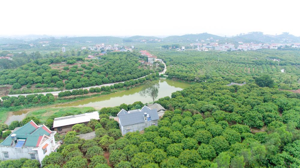 Vùng trồng vải theo chỉ dẫn địa lý và mã vạch xuất khẩu sang thị trường Nhật Bản tại huyện Lục Ngạn, tỉnh Bắc Giang.