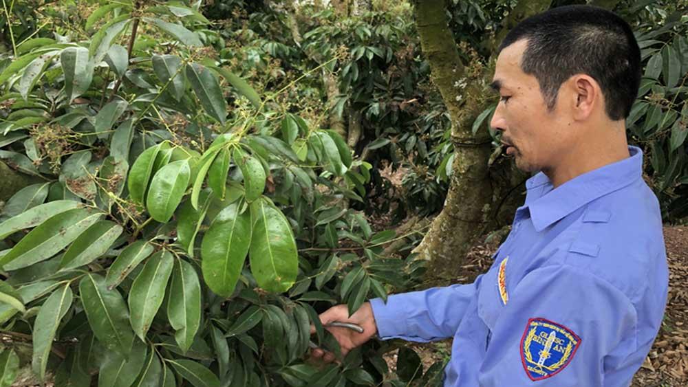Các quy trình chăm sóc cây vải đều được anh Vũ Văn Mến, người trồng vải tại Lục Ngạn ghi lại tỉ mỉ.