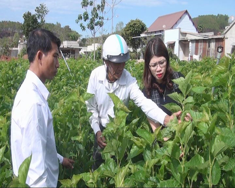 Việc hỗ trợ vốn chuyển đổi cơ cấu cây trồng đã mang lại thu nhập cao cho bà con đồng bào DTTS tại Lâm Hà