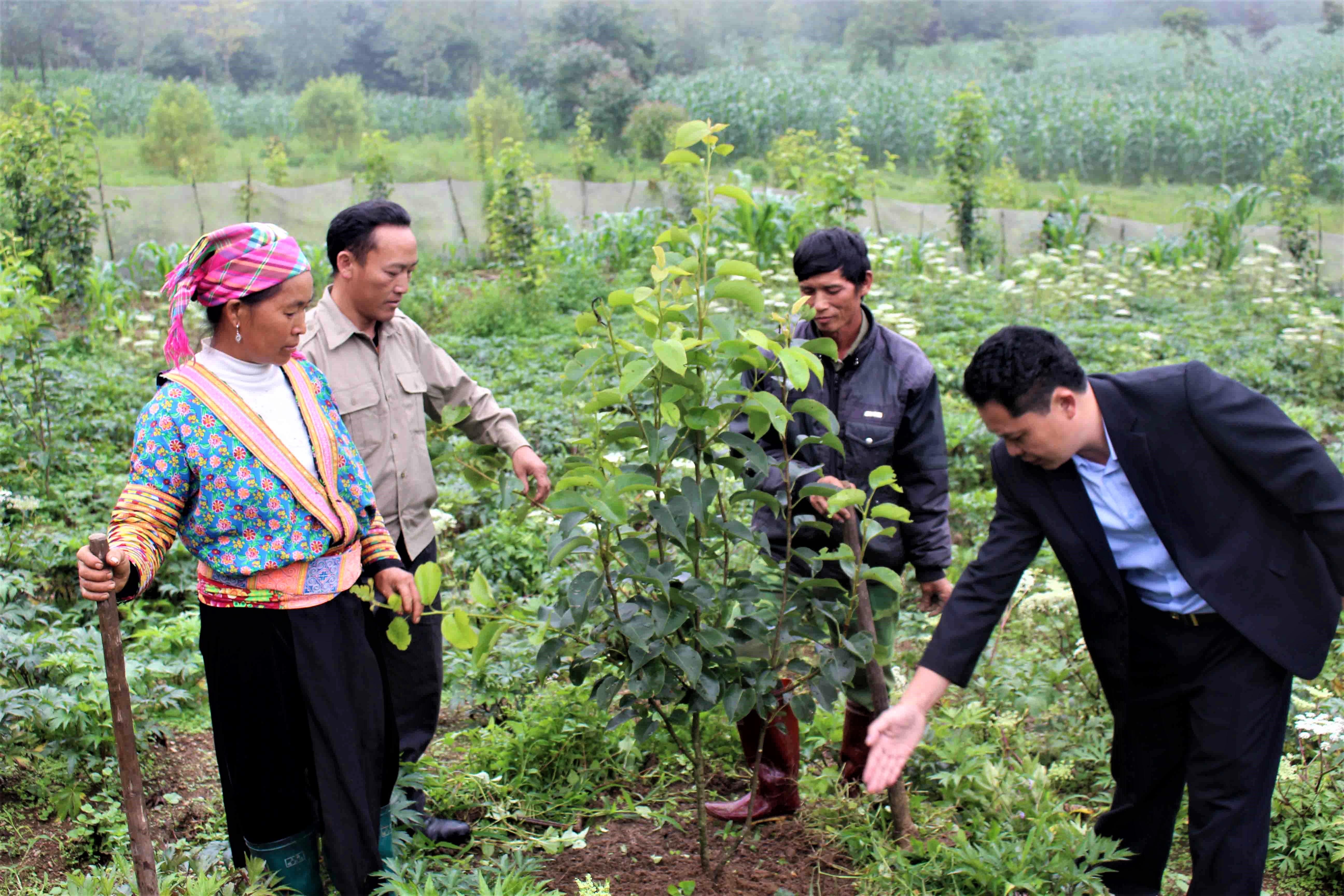 Việc hỗ trợ giống cây trồng phù hợp với điều kiện khí hậu thổ nhưỡng cho đồng bào DTTS là rất quan trọng