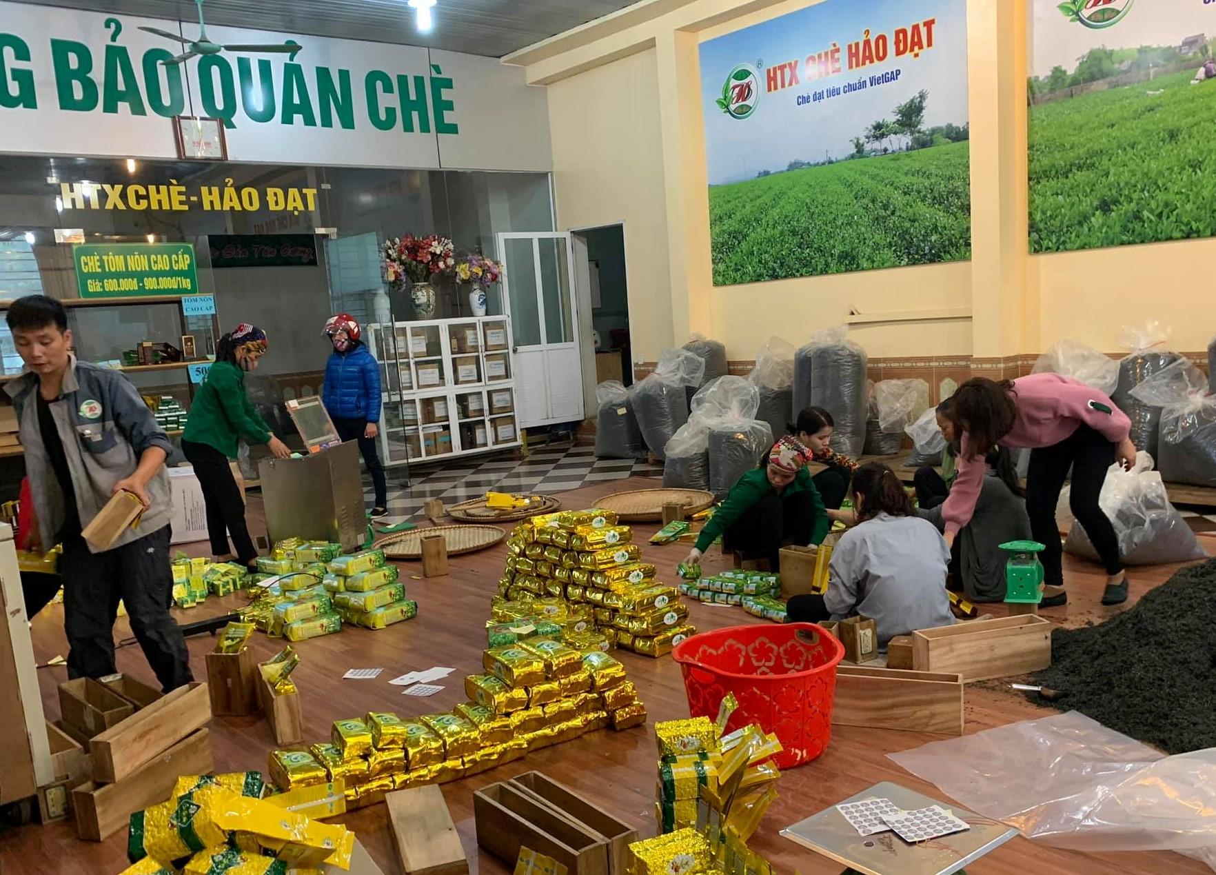 HTX chè Hảo Đạt giúp giải quyết việc làm cho nhiều lao động địa phương