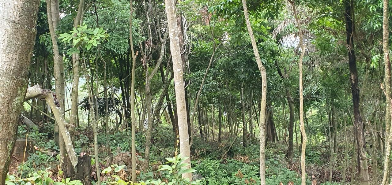 Diện tích đất đất rừng bị cấp chồng lấn gây khó khăn và thiệt hại cho doanh nghiệp. Tuy nhiên, đến nay chưa được chính quyền địa phương xử lý dứt điểm