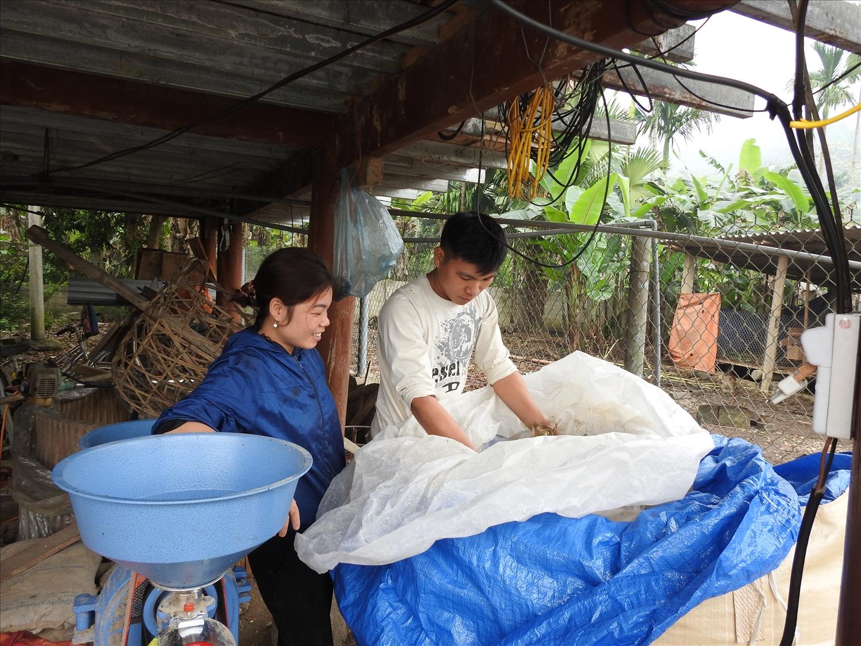 Anh Triệu Văn Ngọ cùng vợ đang thực hiện ủ chua thức ăn cho đàn trâu của gia đình.