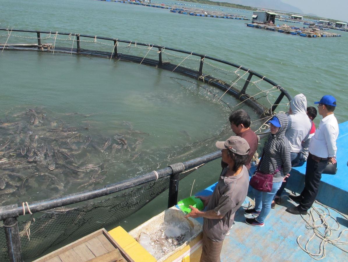 Công nghệ nhuộm lưới chống bám bẩn giúp bảo vệ môi trường, giảm chi phí nhân công súc rửa lưới.