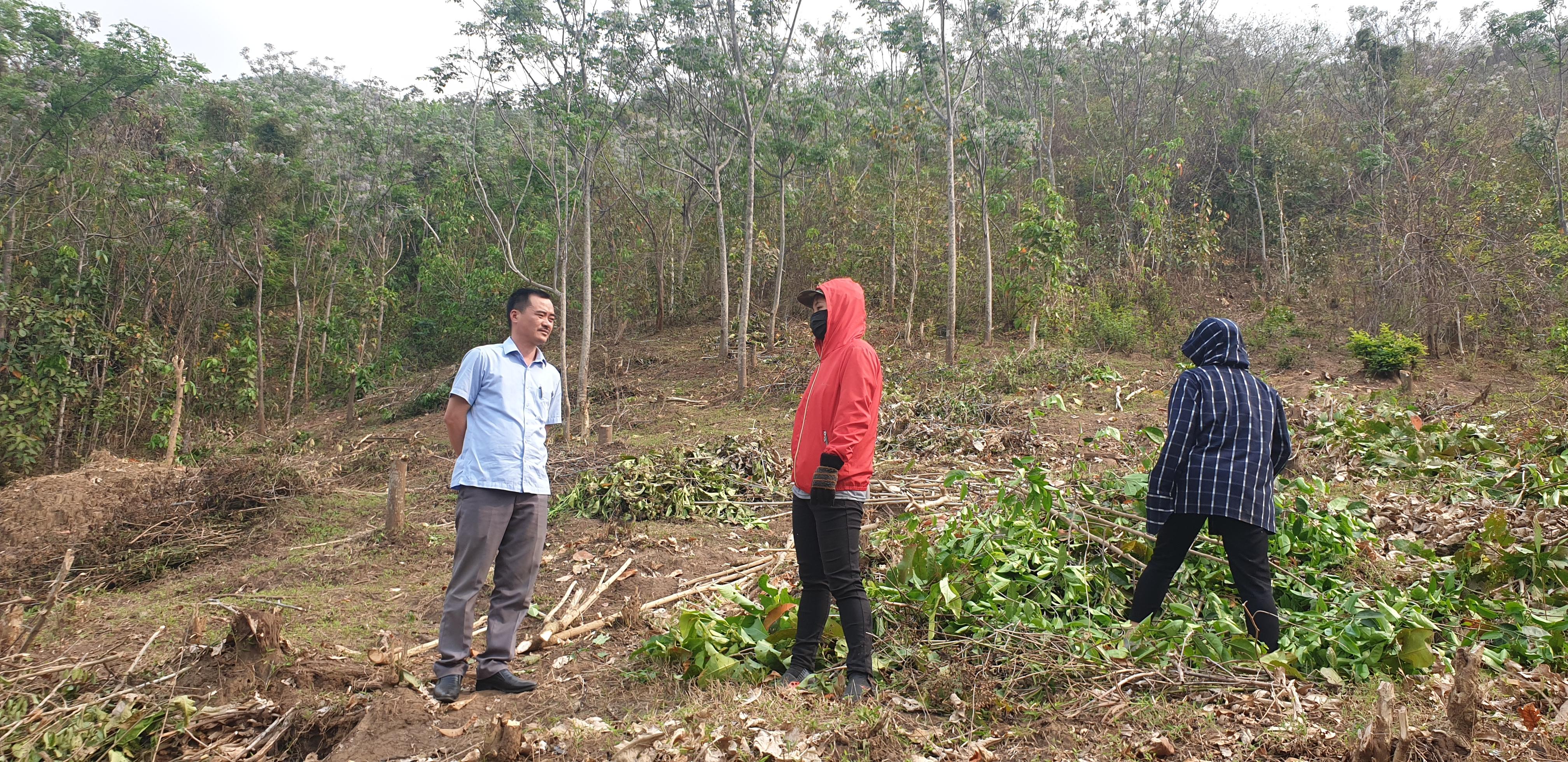 Từ dự án được kỳ vọng giúp giảm nghèo, giờ đây những cây xoan lại trở thành nỗi bức xúc của người dân