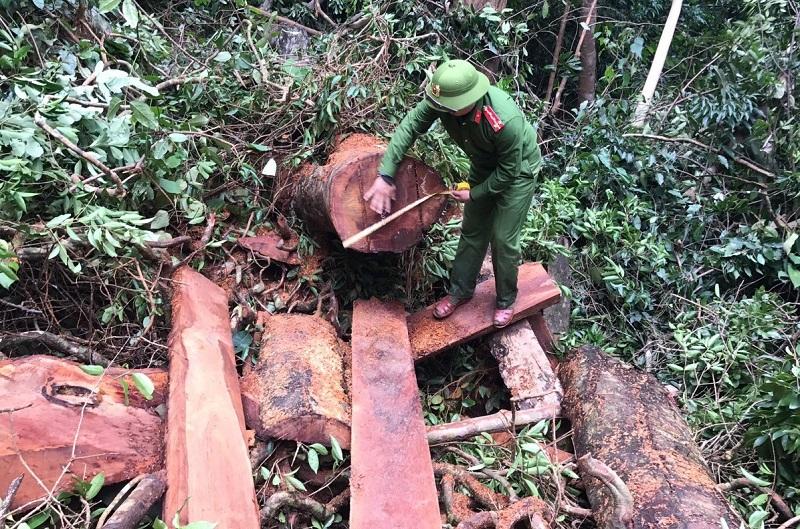 Hiện trường một vụ phá rừng ở Tuyên Hóa, Quảng Bình