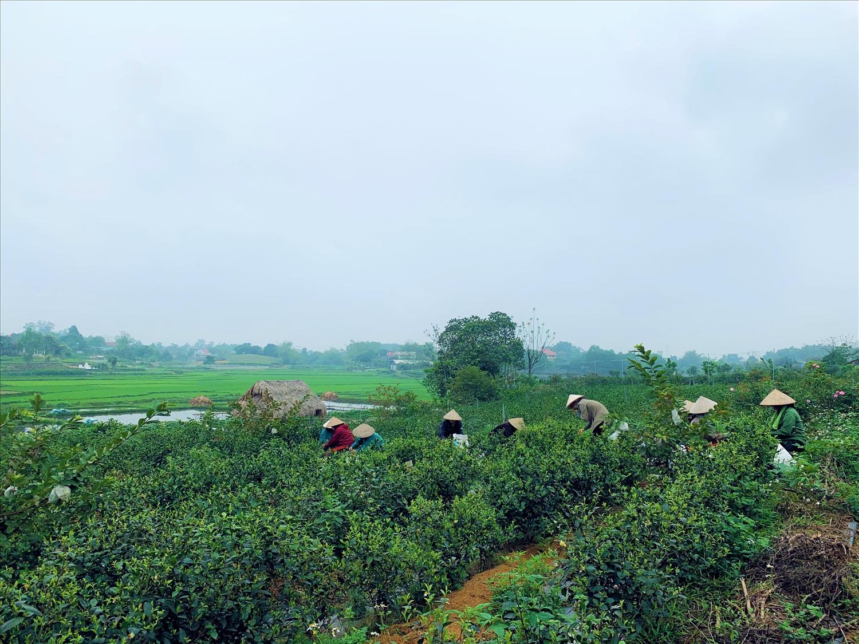 Cơ sở sản xuất của Lê Sơn Hải đã tạo công việc ổn định cho 3 - 4 lao động tại địa phương.