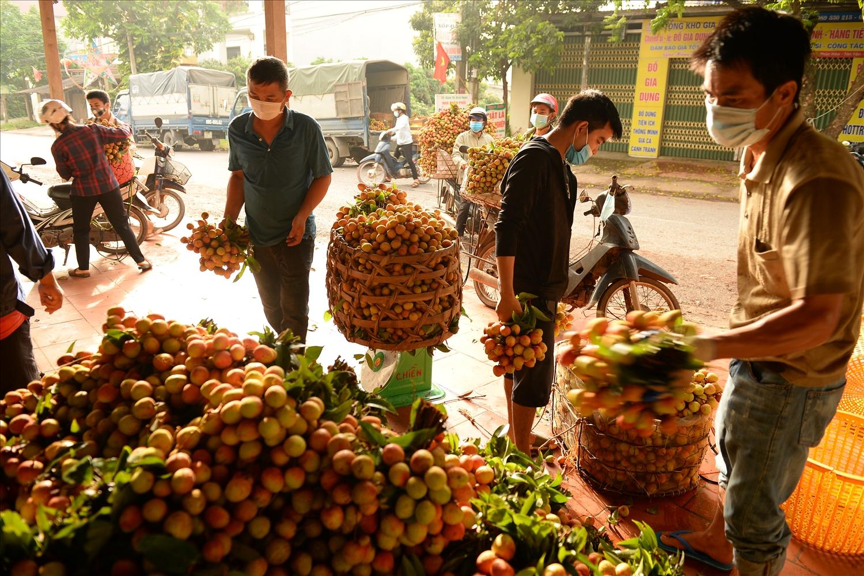 Một điểm thu mua vải thiều sớm tại xã Phúc Hòa, Tân Yên