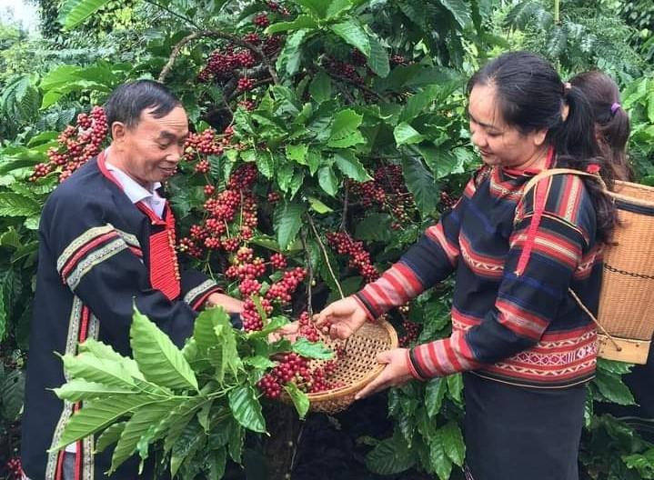 Mặt hàng cà phê của Việt Nam cũng được đánh giá là có rất nhiều lợi ích từ việc thực thi Hiệp đình EVFTA mang lại.