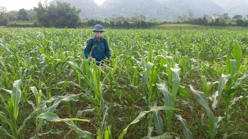Ngô là cây trồng chủ lực ở miền núi, hiện đang đối diện nguy cơ giảm năng suất, sản lượng do biến đổi khí hậu, nhiều loại sâu bệnh mới xuất hiện.