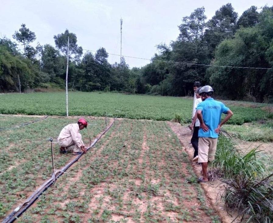: Công nghệ tưới nước tiết kiệm cho cây trồng có vốn đầu tư cao nên rất cần có chính sách hỗ trợ người nông dân