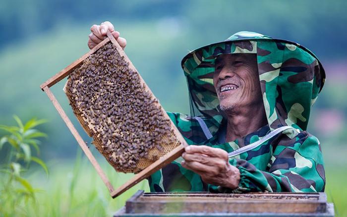 Ông Nguyễn Thượng Hiền, một người cao tuổi tham gia phát triển kinh tế gia đình qua việc nuôi ong ở huyện Sơn Động, Bắc Giang (Ảnh: UNFPA Việt Nam)