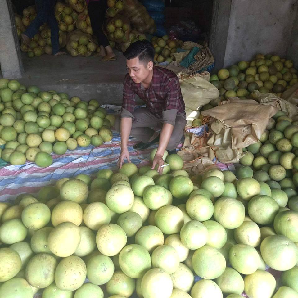 Mùa thu hái bưởi ở các làng của vùng đất Đoan Hùng