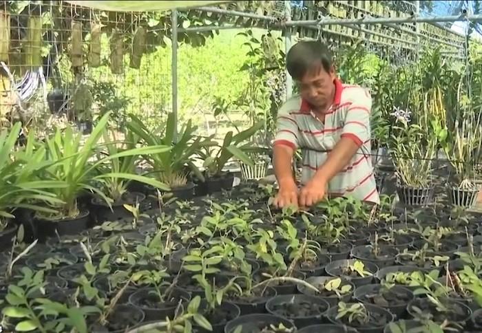 ng Nguyễn Văn Hồng đang chăm sóc các chậu lan thương phẩm.