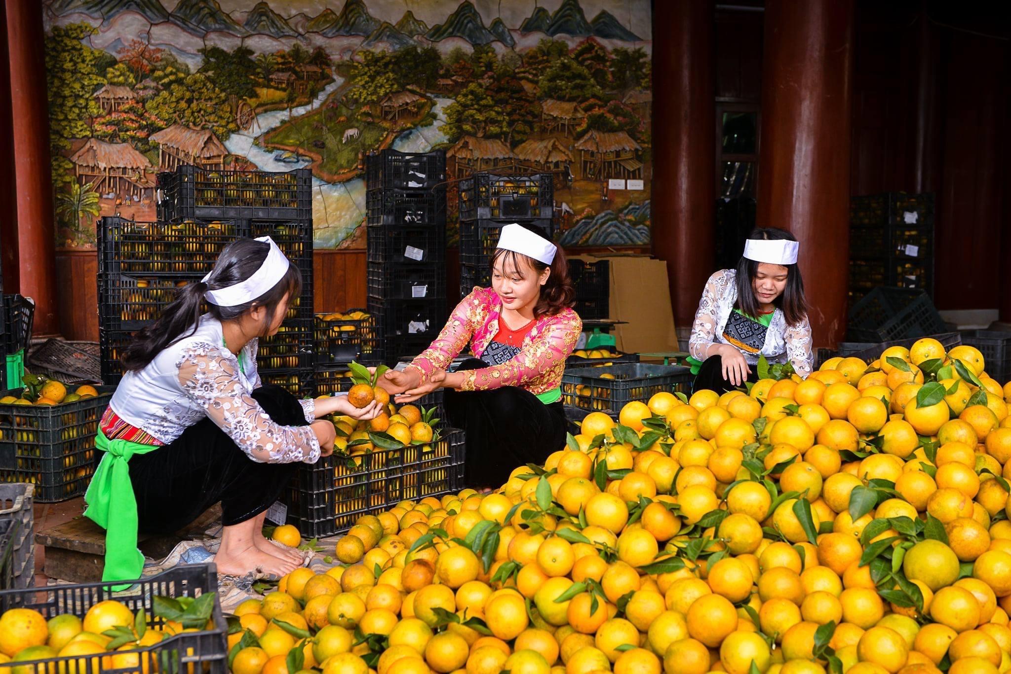 Nnhiều mô hình nông nghiệp góp phần thúc đẩy phát triển kinh tế - xã hội vùng DTTS tỉnh Hoà Bình