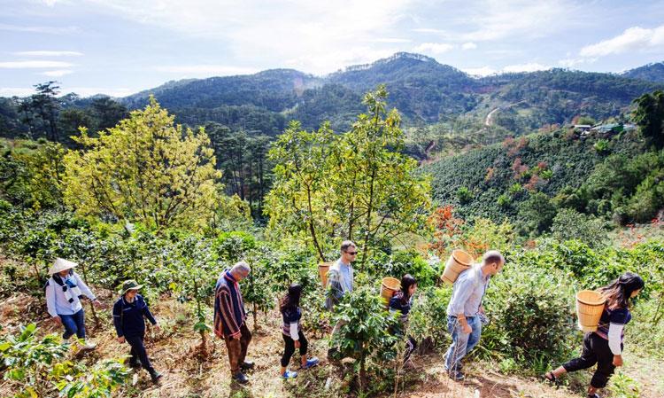 Du khách nước ngoài trải nghiệm thu hoạch cà phê cùng với đồng bào dân tộc thiểu số địa phương.