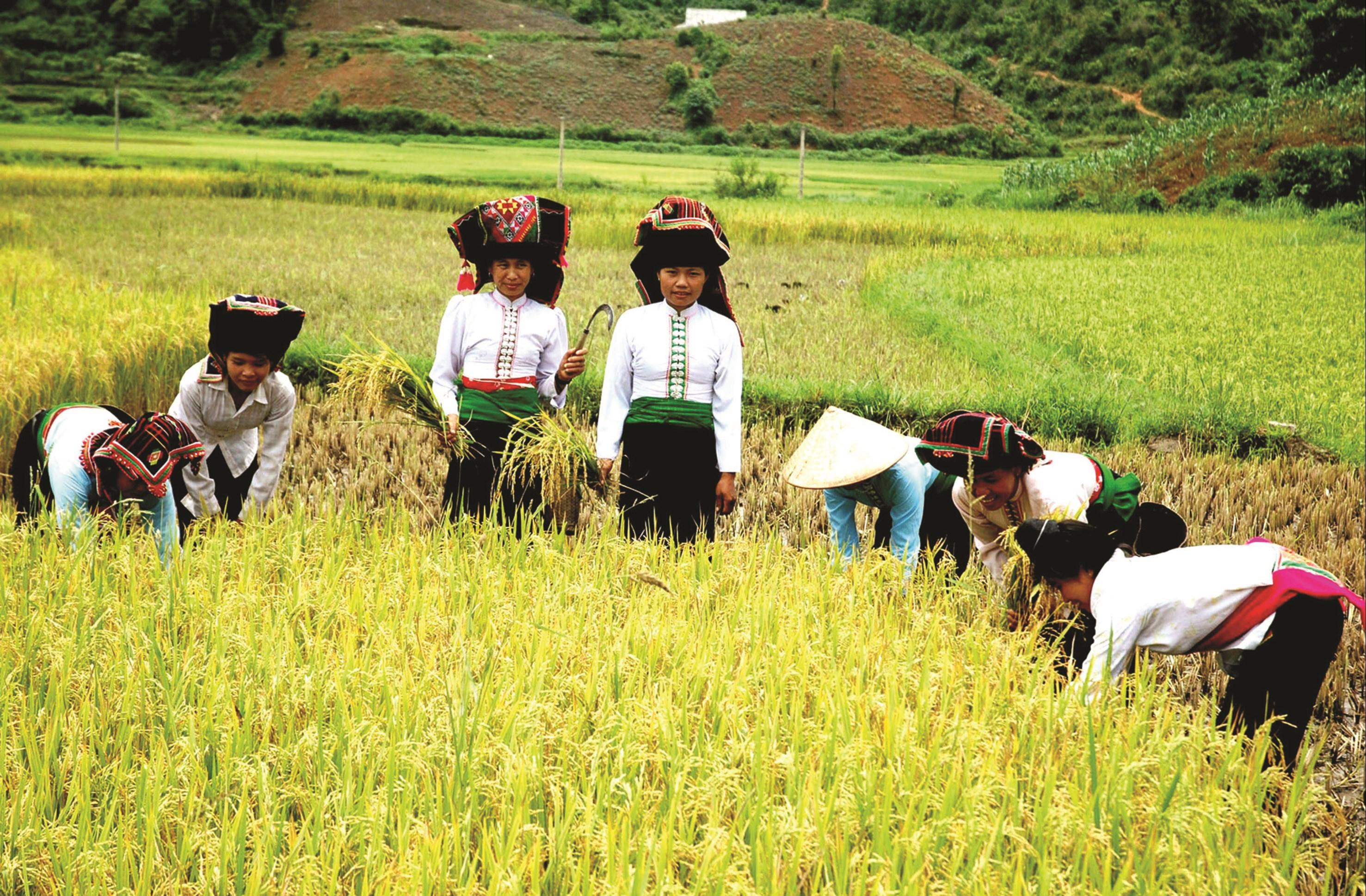 Lúa gạo - 1 trong 5 mặt hàng tạo ấn tượng nhất trong xuất khẩu nông sản.
