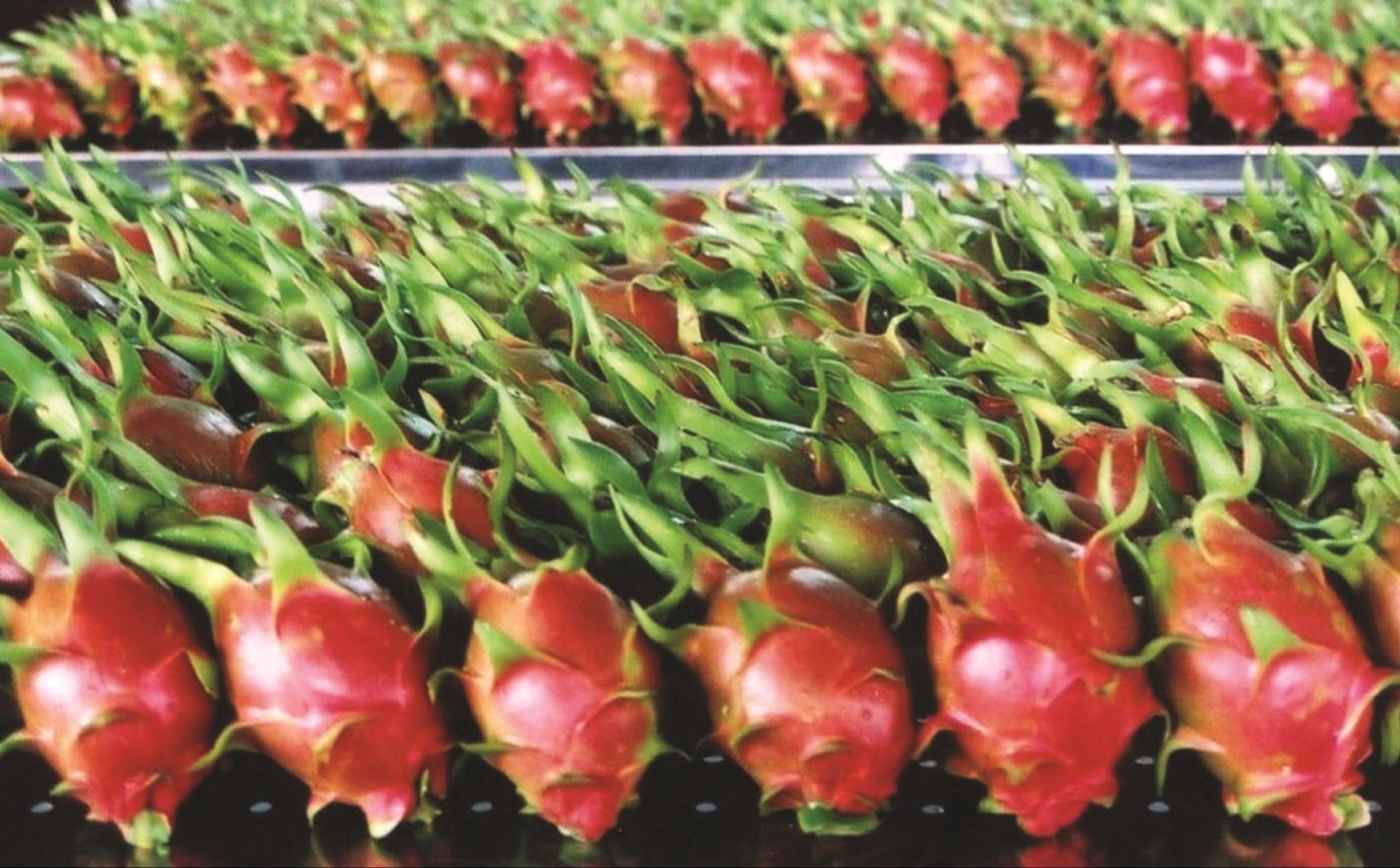 Nhiều mặt hàng nông sản vùng DTTS và miền núi góp phần không nhỏ vào thành quả xuất khẩu nông sản.