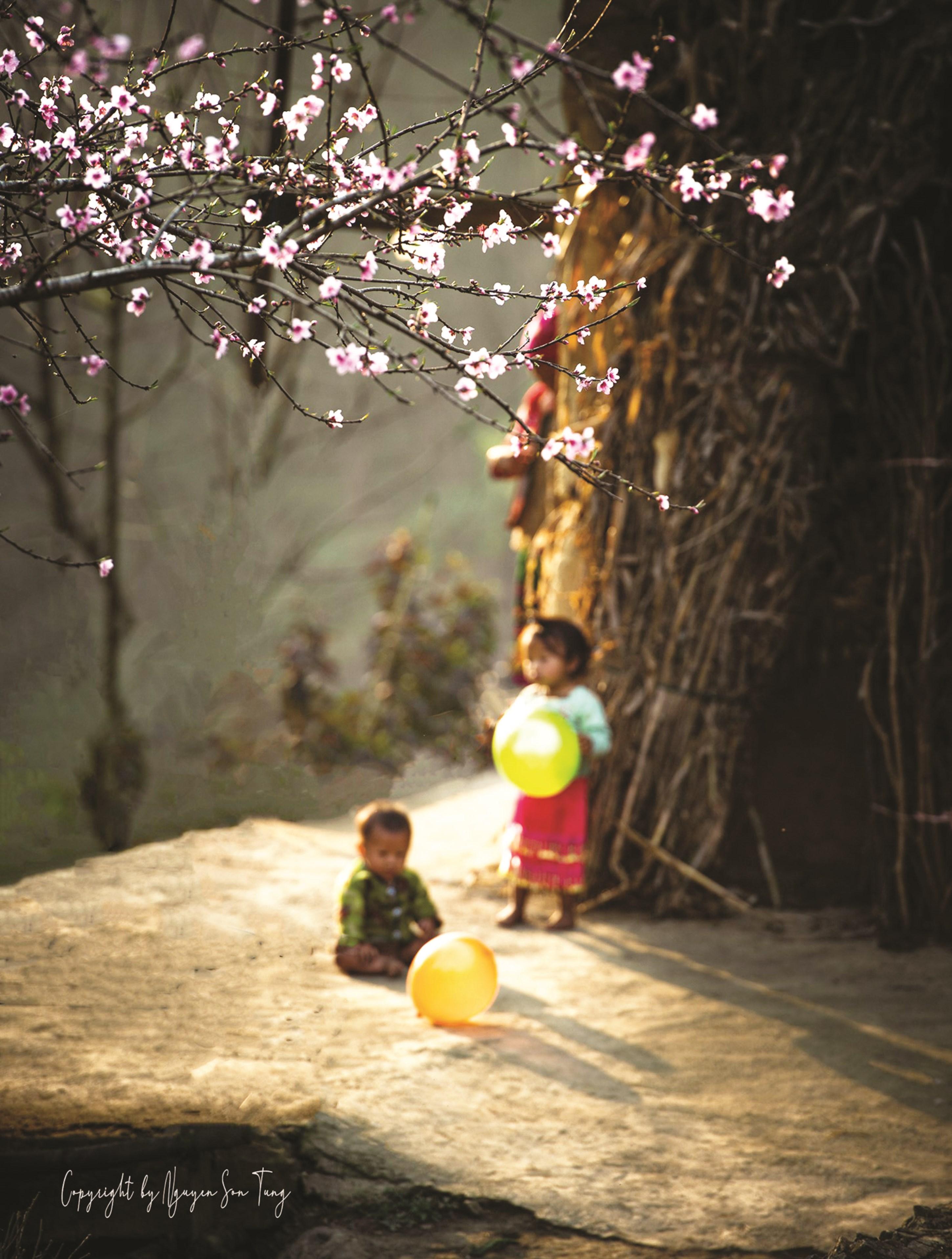 Khung cảnh mùa Xuân vùng cao dưới góc máy của nhiếp ảnh gia Nguyễn Sơn Tùng