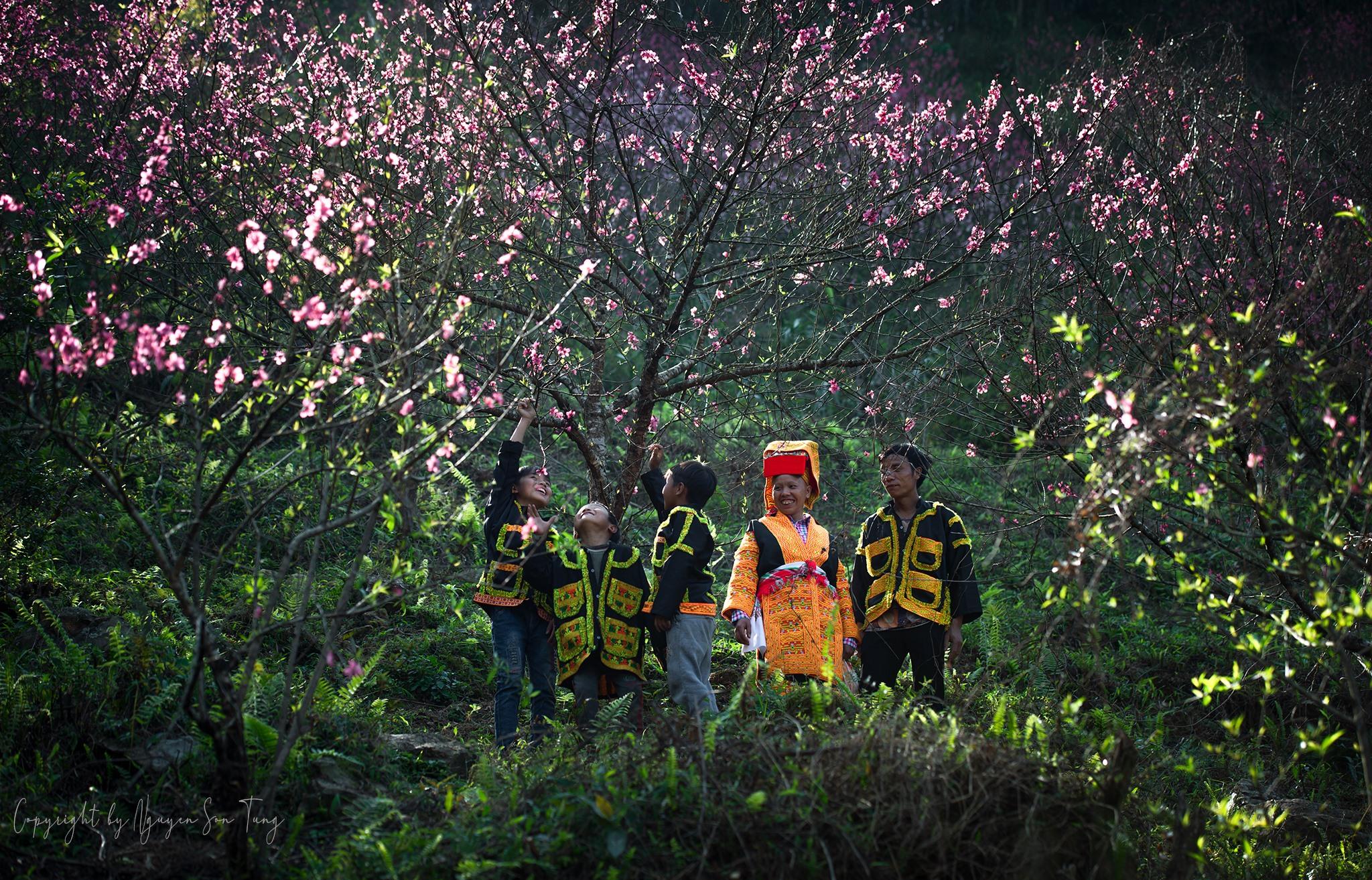 Trong rừng đào Mẫu Sơn.