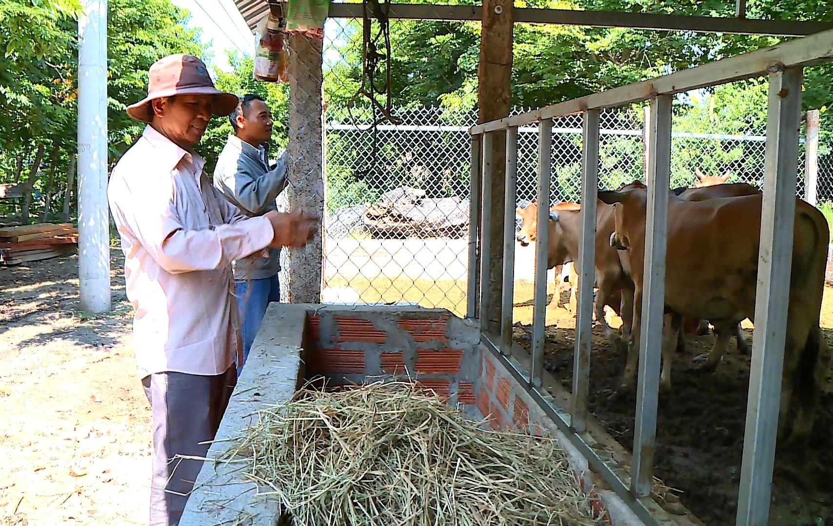 Từ mô hình nuôi bò, ông Kpă Krik mang về cho gia đình 300 triệu/năm