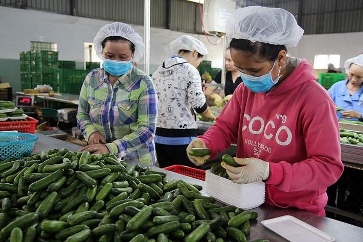Đẩy mạnh liên kết sản xuất, chế biến và tiêu thụ nông sản. Ảnh: Tư liệu
