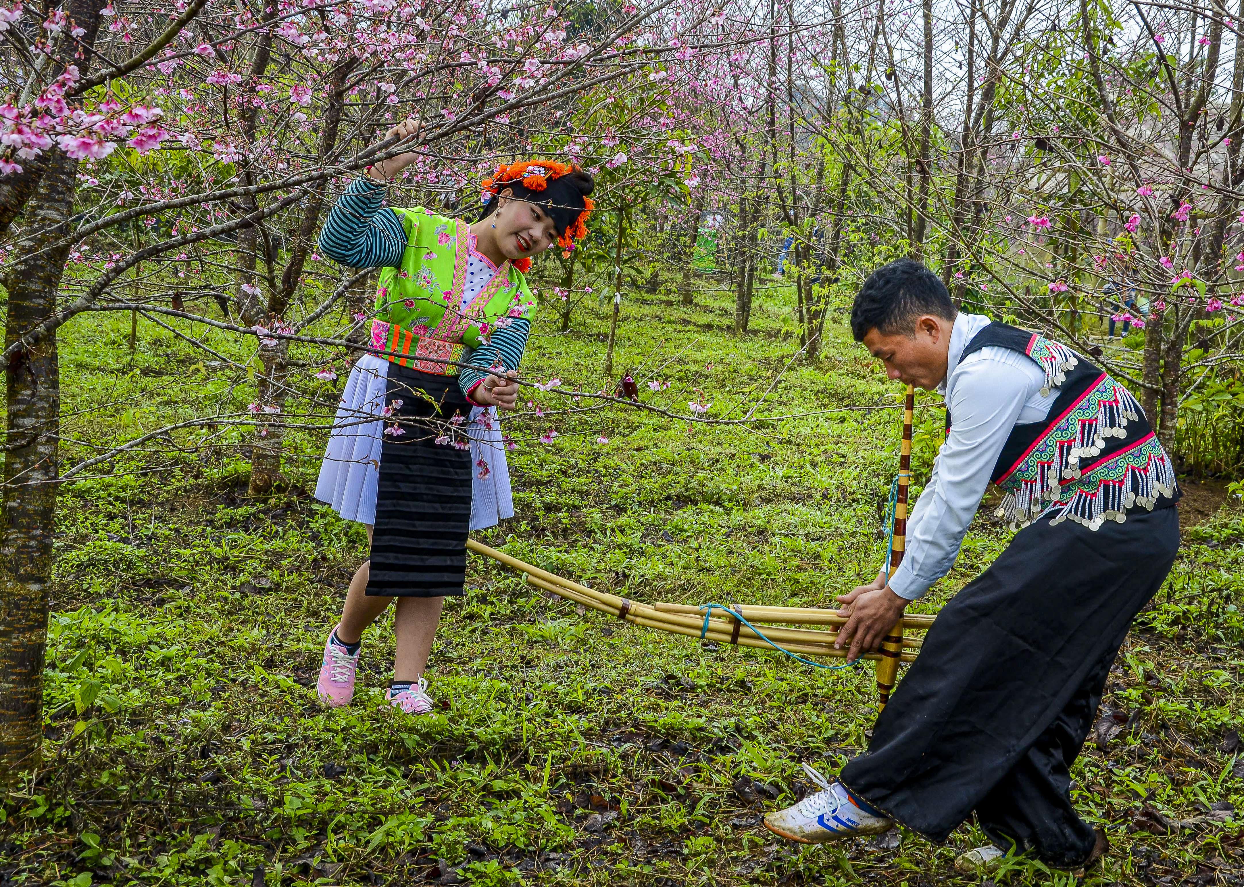 Tiếng khèn Mông thay lời tỏ tình mùa Xuân.