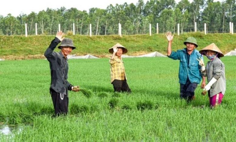 Người dân vùng Đồng Cò xã Viên Thành sản xuất quy mô lớn từ những thửa ruộng thuê mượn
